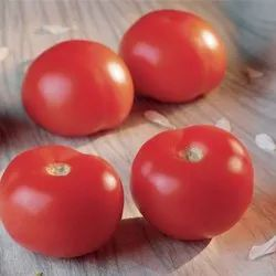 Fresh Red Tomato, Packaging Size: 20 kg