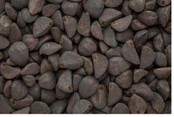 Kaladana - Ipomoea seeds