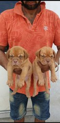 In Kanpur Pet Care Service