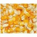 Indian Dry Yellow Maize, High In Protein