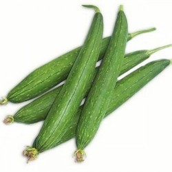 Organic Ridge Gourd, Packaging: Plastic Bag or Polythen, Pesticide Free (for Raw Products)