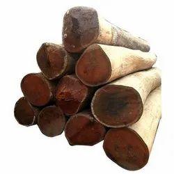 Sal Wood Log