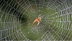 One Time Commercial Spider Control Services, in Hyderabad