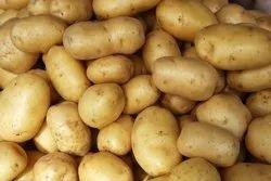 Fresh A Grade Potato, Gunny Bag, 20 Kg