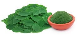 Moringa Leaves Powder