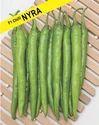 Kgp Seeds Green Chilli - Nyra