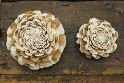 Mix belli Carnation Flower