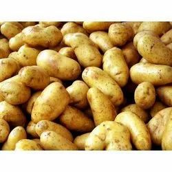 Natural White Fresh Seed Potato, Packaging Type: Plastic Bag, Packaging Size: 50 Kg