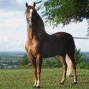 Endurance Horse Race Feed