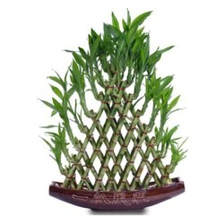 Green 8 Layers Pyramid Shaped Bamboo for Decoration