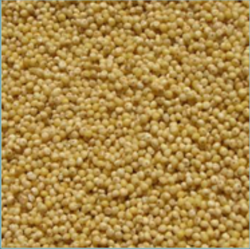 Whole Natural Millet (Bajra), Organic