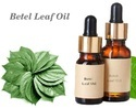 Betel Leaf Oil / Betel Leaf Essential Oil