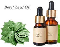 Betel Leaf Oil / Betel Leaf Essential Oil