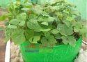 Maadi Thottam HDPE Grow Bag KIT