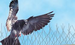 Bird Pro Pest Control Service