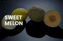 Sweet Galia Melon
