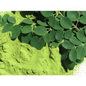 100% Pure Moringa Dry Leaves 80 Mesh Fine Powder