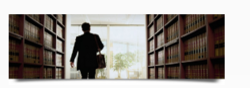 Public Interest Litigation Consultants Services
