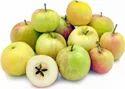 Ambri Apple