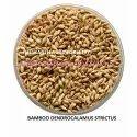 Dendrocalamus Strictus Bamboo Seed