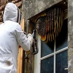 Honey Bees Remover Services