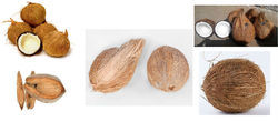 High Quality Wholesale Husked Coconuts