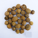 Sakthi Seeds Teak Seeds- Tectona Grandis Seeds, For Timber