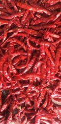 A Grade Red Hot Chilli, For Powder, Andhra Pradesh