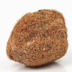 Kesar ZemsEkakshi Narial Astrology Fengshui Vastu Ekakshee Nariyal Coconut - A Very Rare Lucky Charm