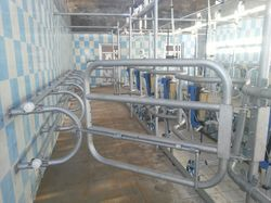 Swingover Milking Parlor 5  Point