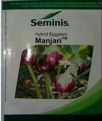 SEMINIS MANJARI (BRINJAL SEEDS), Packaging Type: Packet, Packaging Size: 10 Gm