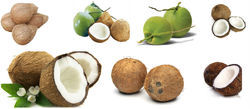 Best Quality Coconut Products