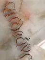 Cordyceps Sinensis Herb