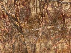 Rainforest Marble Bidasar