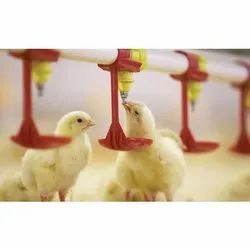 Nipple Drinking System for Broiler Farms