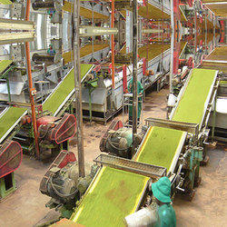 Overhead Conveyor for Tea Estates