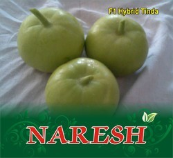 Naresh F-1 Hybrid Tinda Seed