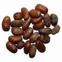 Monodara Myristica Seeds