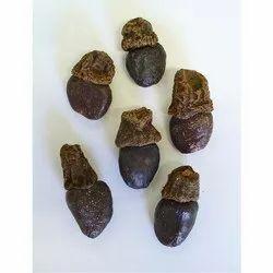Biba Seeds