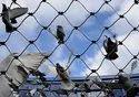 Bird Control Net