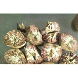 Betel Nuts - Wholesaler & Wholesale Dealers in India