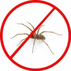 in Home Chemical Treatment Spider Pest Control Services