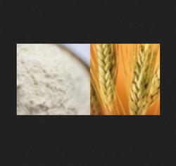 Fresh Wheat And Bread Flour