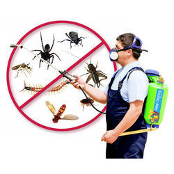 Insects Control Service