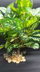 silky plants 17