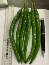 Green Dark Gold F-1 Hybrid Chili Seeds ( Upcoming), Packaging Size: 10 Gm