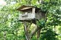How To Build a Tree House Mumbai