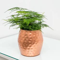 Copper Planter NJO-7804