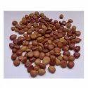 Cassia Fistula Seeds