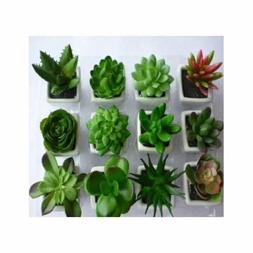 artificial cactus fake succulent plant, fake plant, kritim paudhe